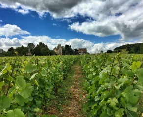 Burgundy Cycling, Gastronomy, and Wine