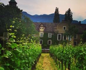 Swiss Rhine Wine: Maienfeld